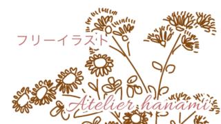 フリーイラスト小菊